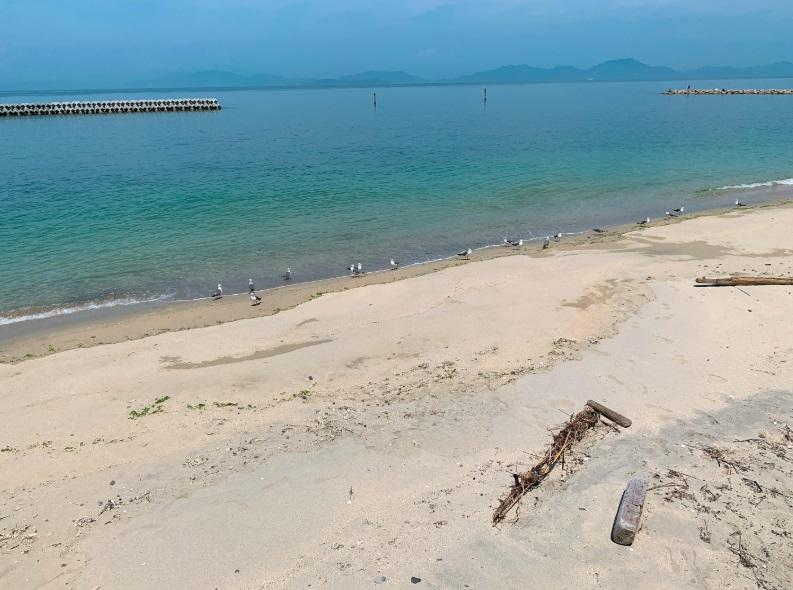 海岸,鳥の群れ