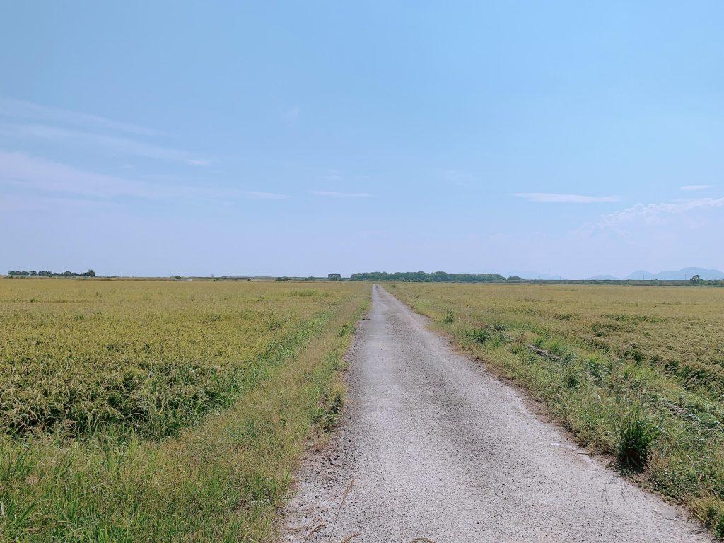 山陽小野田市の田舎道